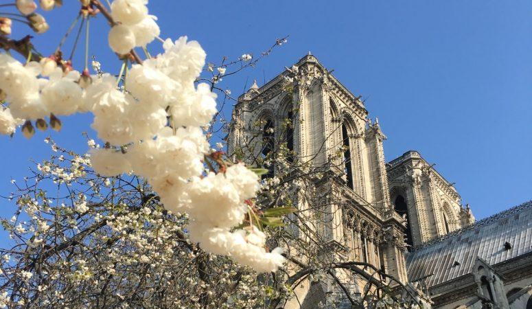 En siste vår for Notre Dame